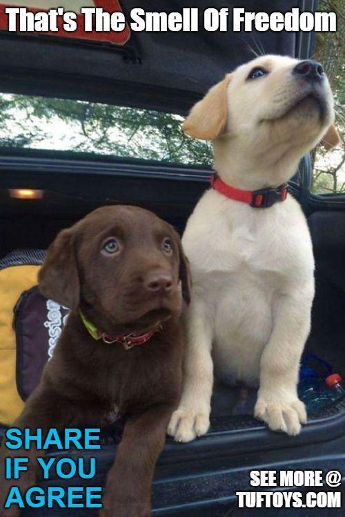 Funny Dog Memes – Part 1 Funny Dog Memes Pinterest
