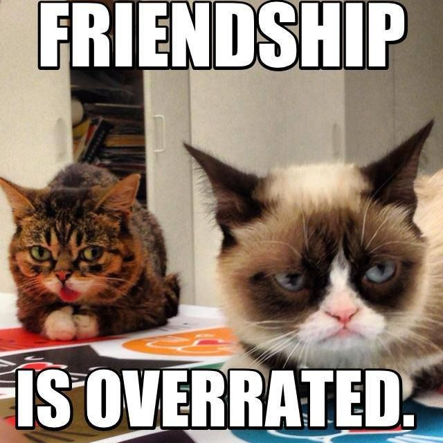 Friendship Is Overrated Funny Grumpy Cat Meme Picture
