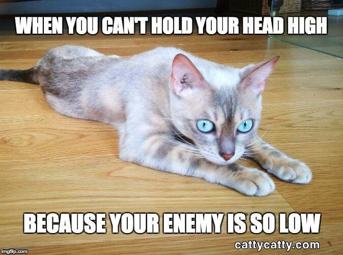 Sad cat meme of Catty Catty