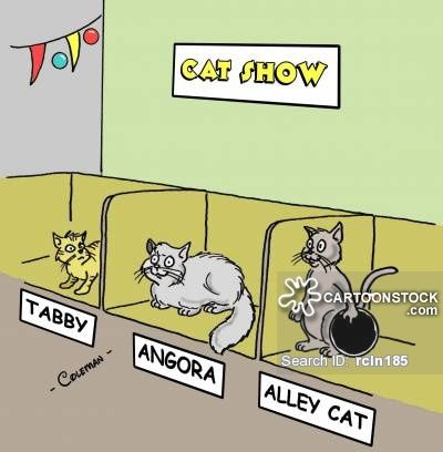 Cat Show cartoons Cat Show cartoon funny Cat Show picture Cat Show