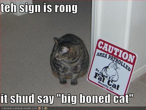 Funny Fat Cat Pics With Captions