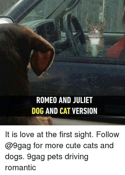 9gag Cats and Cute ROMEO AND JULIET DOG AND CAT VERSION TO EI