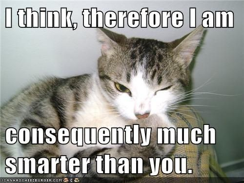 funny cat pictures Lolcats I think therefore I am