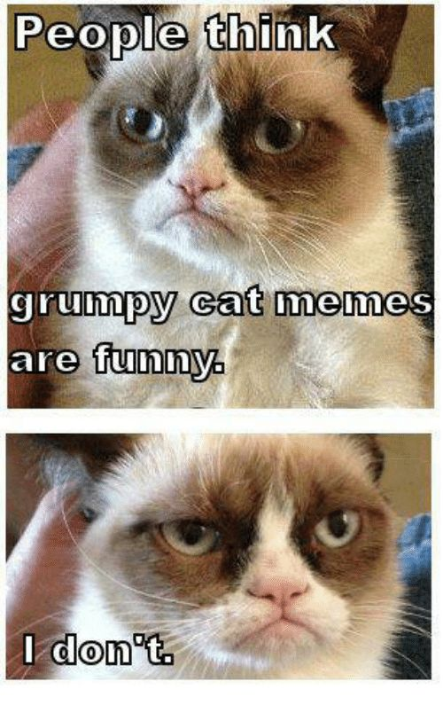 Memes 🤖 and Don People think grumpy Cat memes are funny I