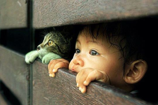 Cat and little girl…