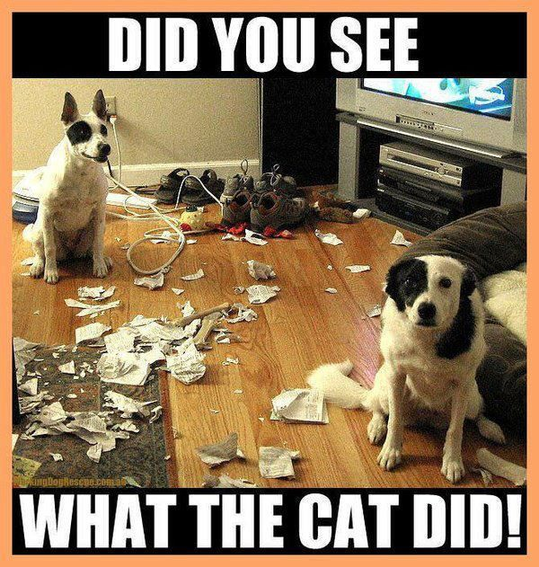 Dogs always blame it on the Cat Do you see what the Cat Done Funny Dogs Cute