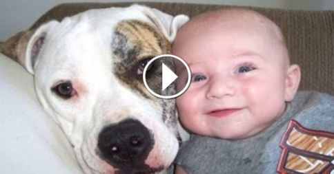 Funny Cats And Dogs Playing With Babies pilation