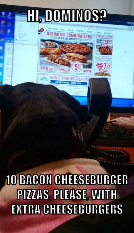Lucy the dog orders pizza