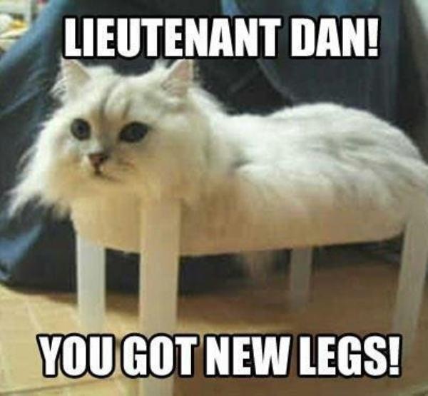 Catch The Shocking Funny Cat Memes Donald Trump Hilarious Pets