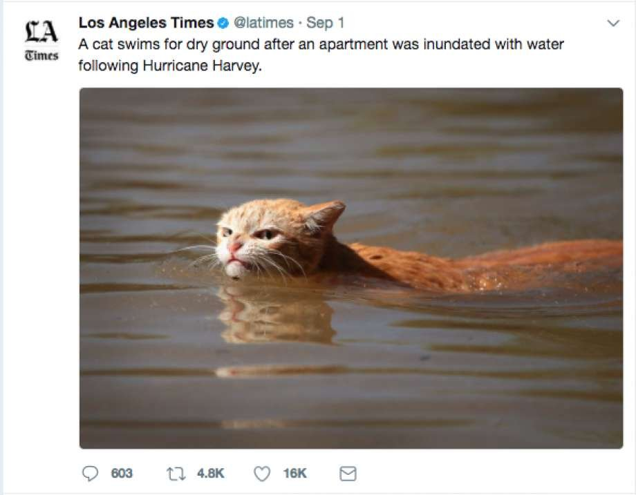 The photo that launched a bunch of angry cat memes Twitter