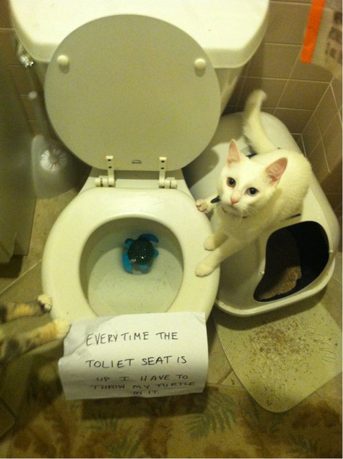 Funniest Cat Shaming