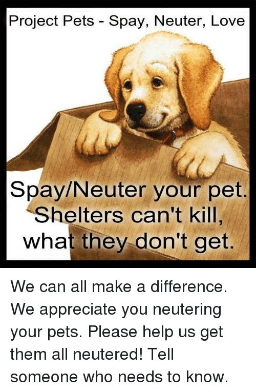 Love Memes and Appreciate Project Pets Spay Neuter Love Spay