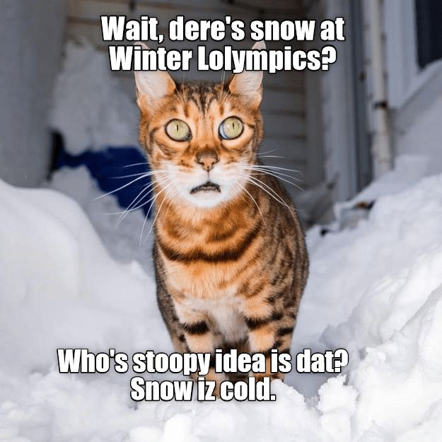 Grab the Beautiful Funny Snow Cat Memes