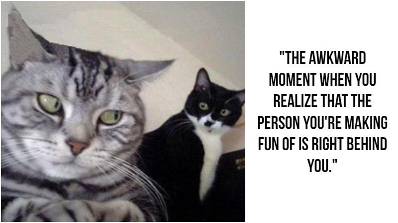 Gather the Incredible Funny the Cat Did It Memes ...