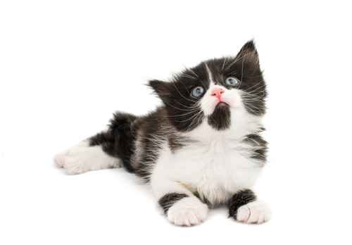 There are a lot of funny unique color based as well character based names for cats If you need a name for your cat you came to right place
