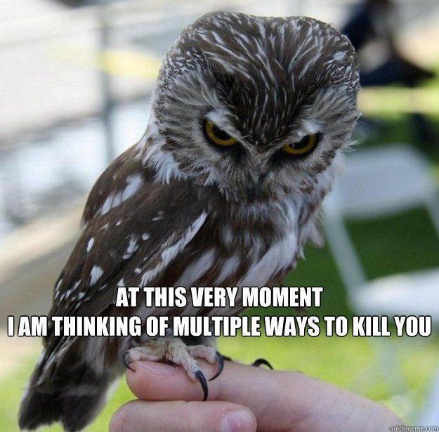 Grammar Owl I shall call him Grant