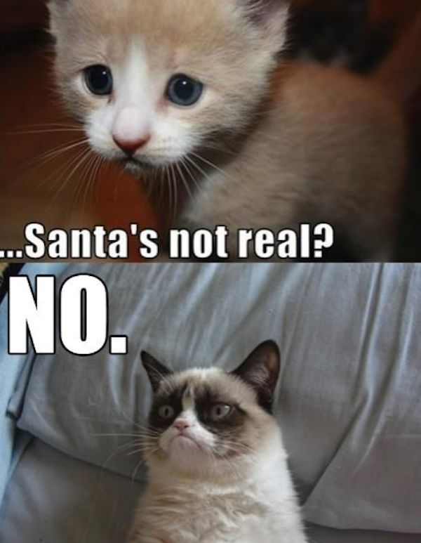 Grab the Beautiful Grumpy Cat Memes Clean Funny