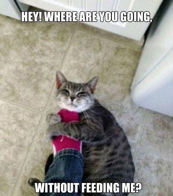 funny cat memes MEMEs