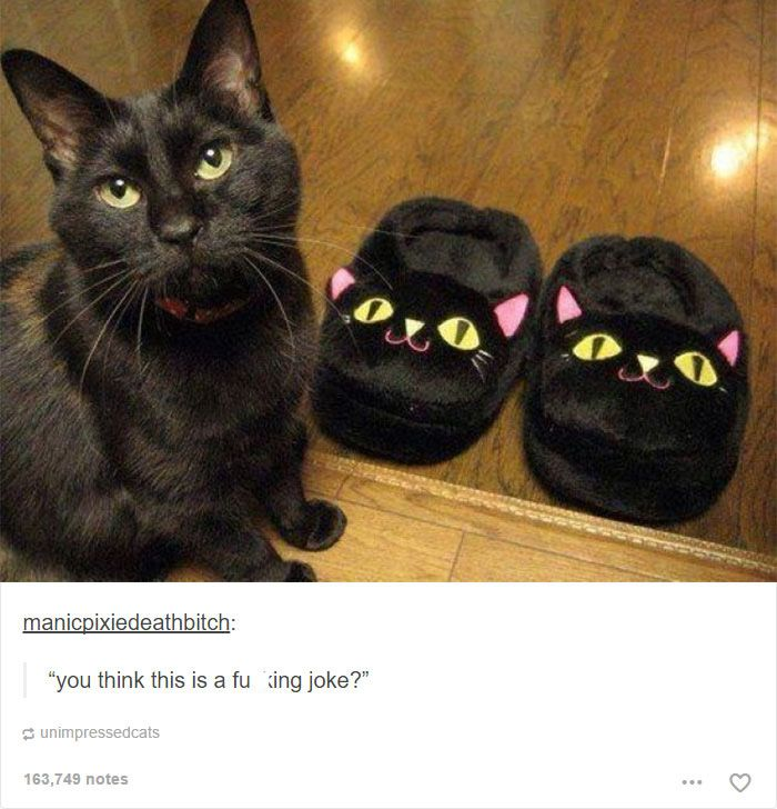 52 funny cat memes that prove cats still rule the internet
