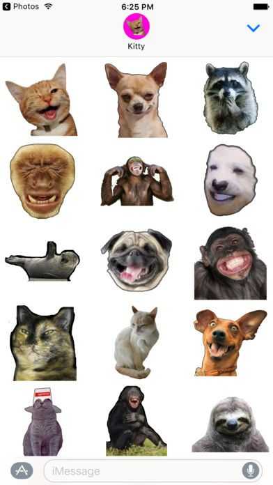 Funny Animals memes stickers pack for iMessage