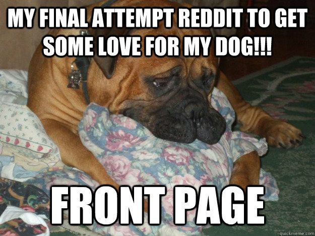 my final attempt reddit to some love for my dog front page