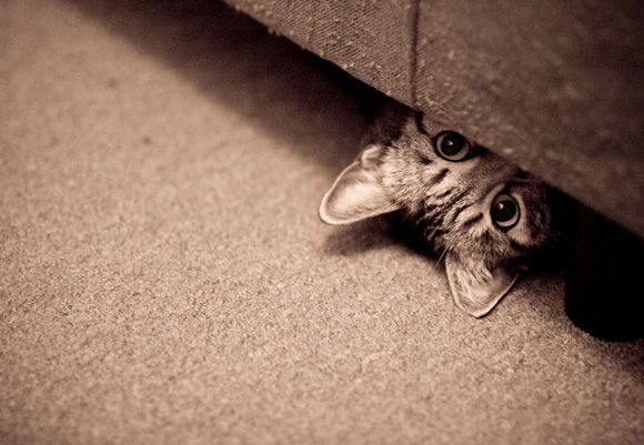 cat looking from under the bed