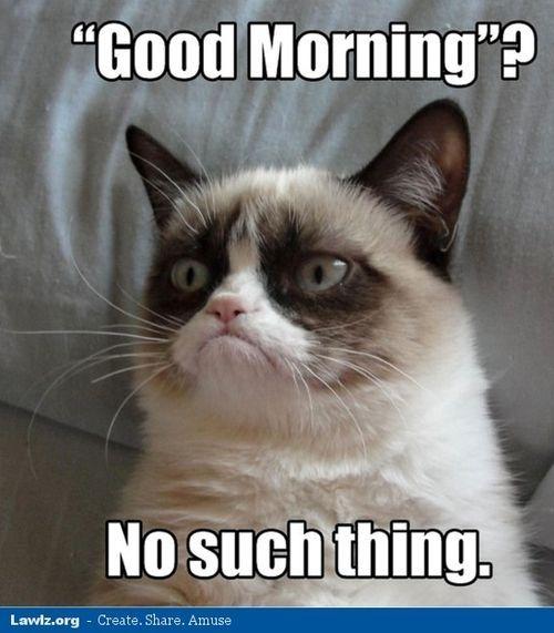 Grumpy Cat Meme No
