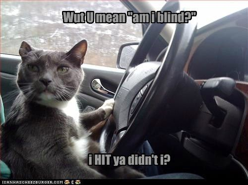 rage cat car road rage driving Cats funny