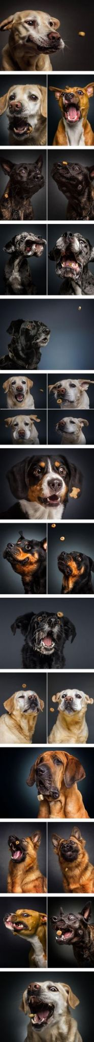 grapher Captures The Hilarious Expressions of Dogs Catching Treats