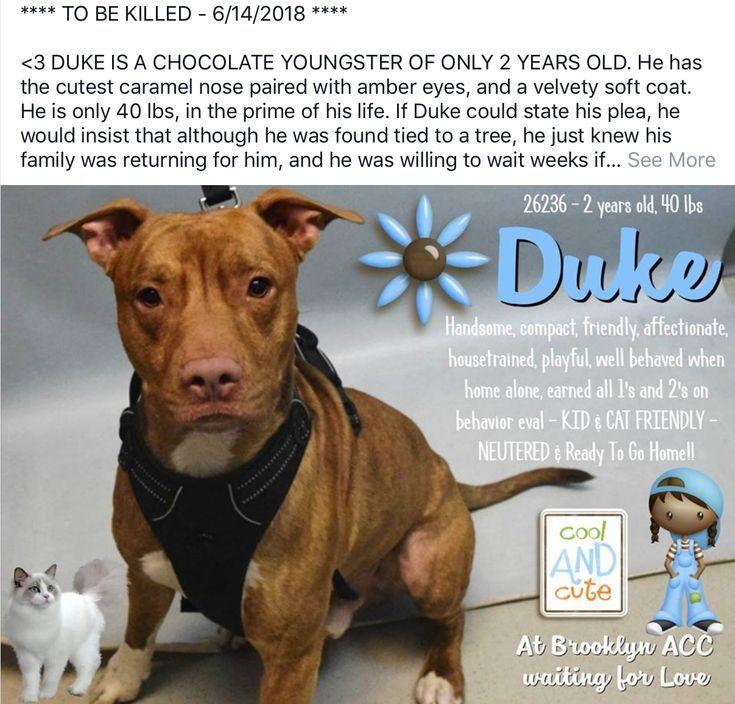 DUKE TO DIE 06 14 18