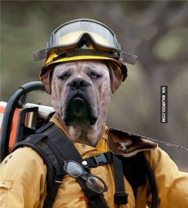 23 shopped Funny of Animal Fashion Cutest little thangs animals Pinterest