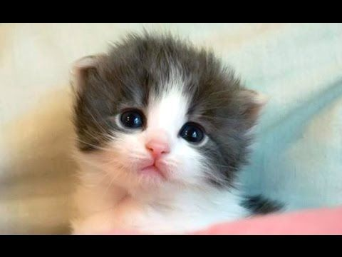 Cute Kittens And Funny Kitten Videos pilation 2016