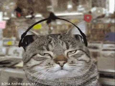 Very Funny Animated CAT GIFs MUSIC