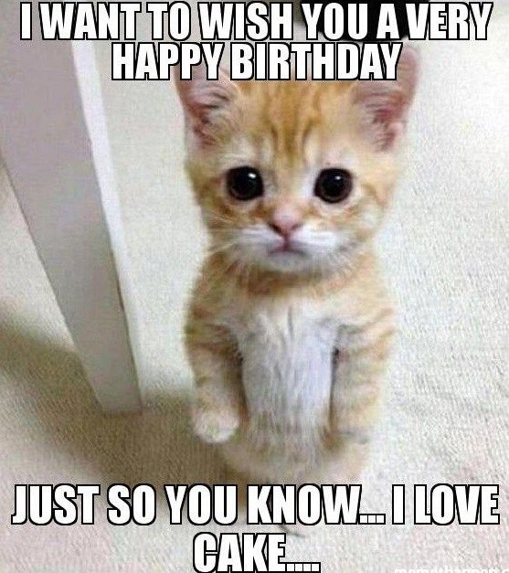 Image result for cat birthday meme