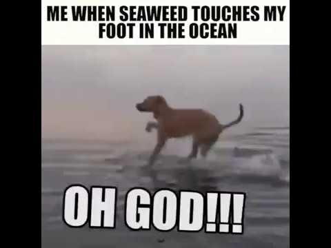 Dog is afraid of sea weed