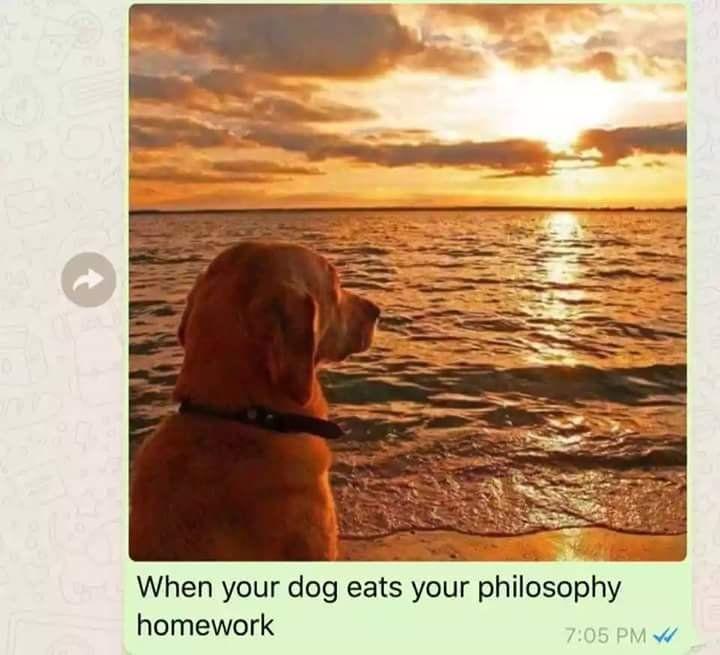 Fun Facts Make Me Smile Animals Dog Funny Animals Behavior Hilarious