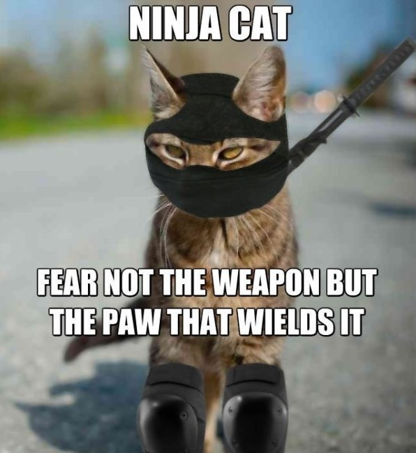 Meme Ninja Cat Fear Not The Weapon But The Paw That Wields It Image