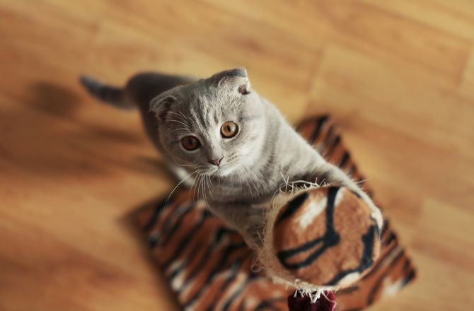 How to Cat Proof Your Couch The Psychology of Scratching Set Up Scratching Alternatives