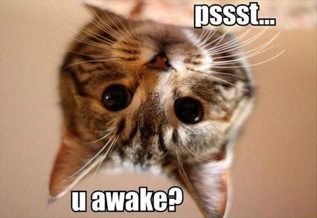 Funny cat in the morning