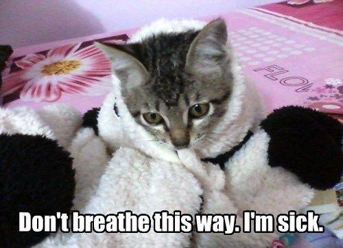 Cats cute kitten sick