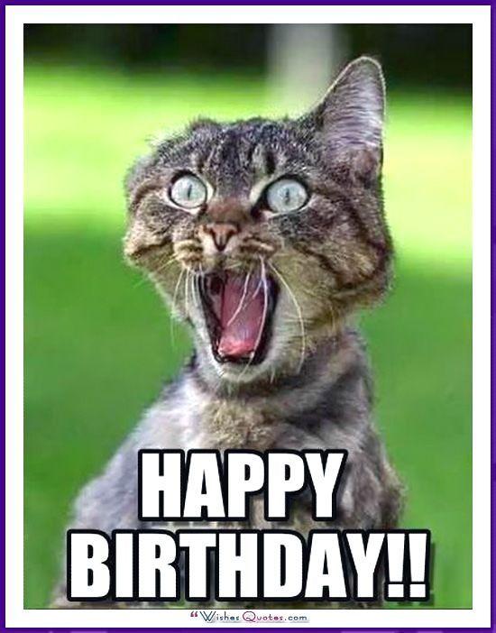 Birthday Meme with a Cat Happy Birthday