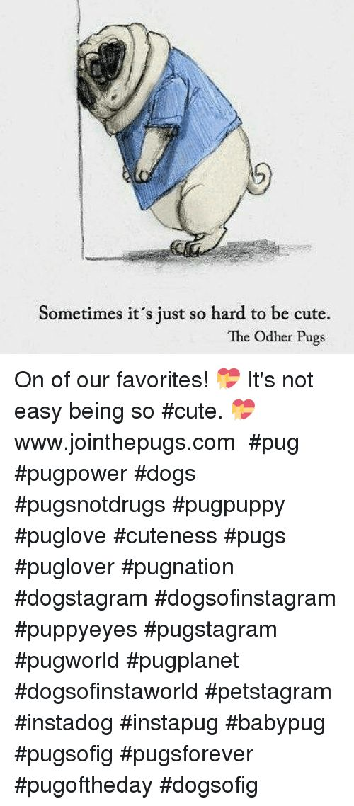 Cute Dogs and Memes Sometimes it s just so hard to be cute