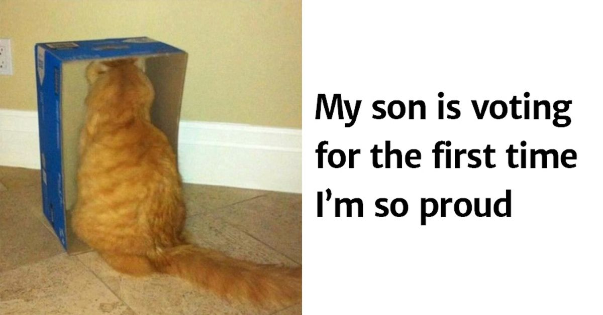 15 hilarious cat tweets that are impawsible not to laugh at