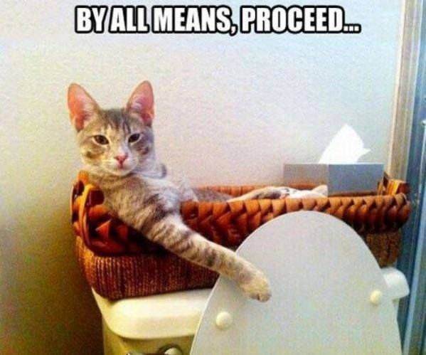 Funny Cat Memes No Privacy with Bathroom Kitty