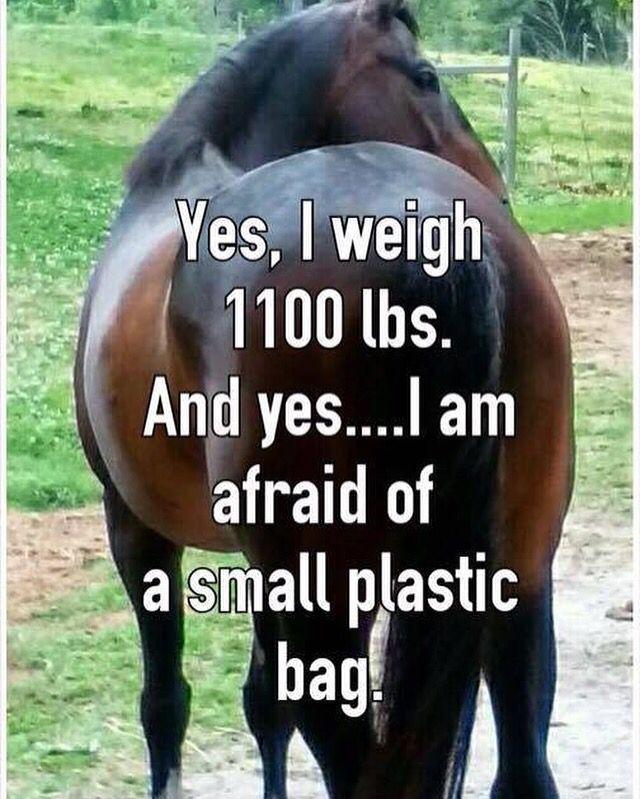 I love Horses Pinterest