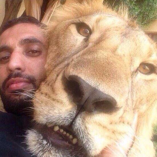 King of the selfie Animal Memes Beautiful Creatures Funny Animal Cute
