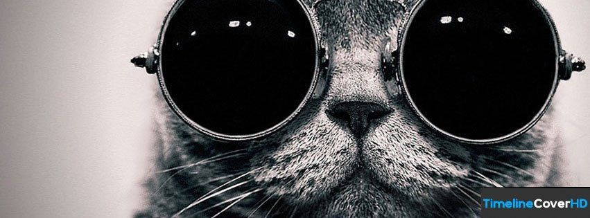hipster Cat With Glasses Timeline Cover 850x315 Covers Timeline Cover HD
