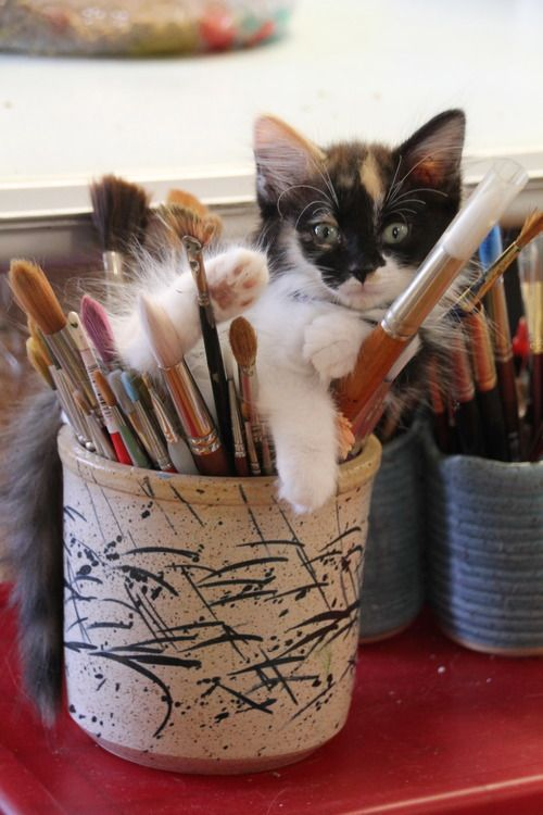 artist s assistant kitten in the paint brushes nap time Cat memes kitty cat humor funny joke gato chat captions feline laugh photo