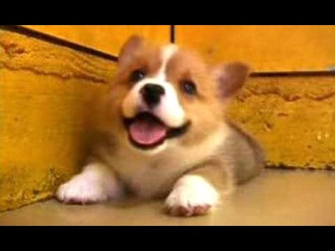 Puppies Barking A Cute Dogs Barking Videos pilation [CUTE]