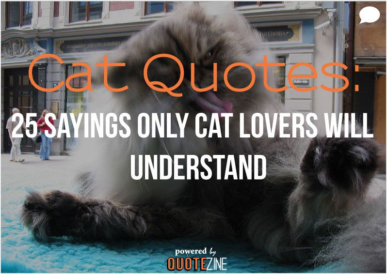 "alt=""cat quotes"""